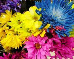 Фото бесплатно хризантемы, букет, цветы