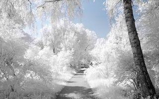 Бесплатные фото зима,дорожка,кустарник,деревья,ветви,иней,мороз