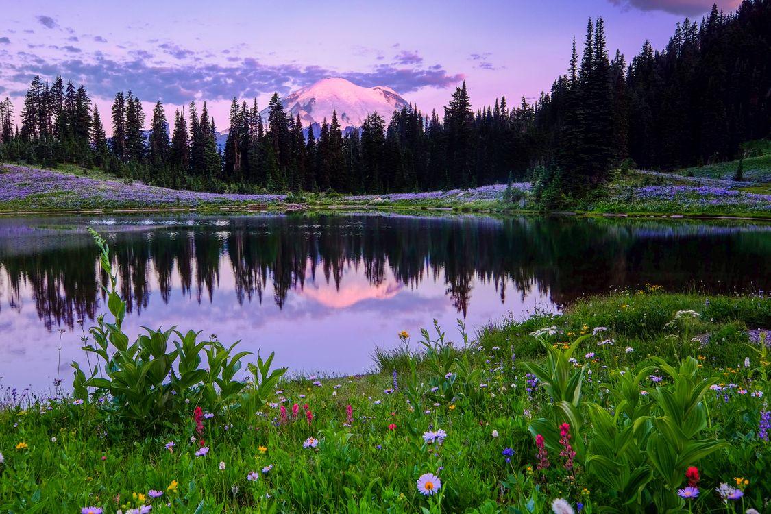Фото бесплатно Mount Rainier National Park, Lake Tipsoo, поле, цветы, деревья, пейзаж, пейзажи