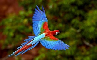 Фото бесплатно попугай, ара, клюв, крылья, хвост, перья, цветные, полет