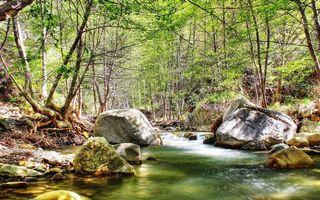 Бесплатные фото река,течение,камни,валуны,лес,деревья,трава