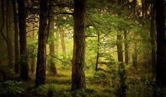 Бесплатные фото лес, деревья, природа, пейзаж, art