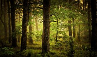 Photo free forest, art, trees