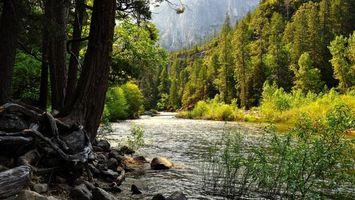 Бесплатные фото река,камни,коряги,трава,деревья,лес,горы