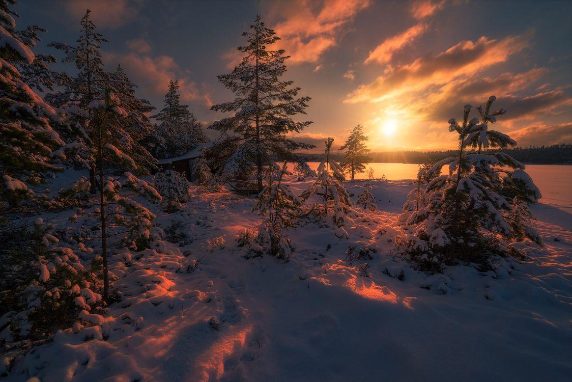 Фото бесплатно Sunset, Ringerike, Norway, закат, зима, озеро, деревья, пейзаж, пейзажи