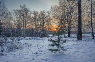 Заставки зима,закат,поле,лес,деревья,пейзаж,На Клязьме