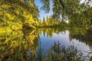 Бесплатные фото лес, деревья, озеро, природа