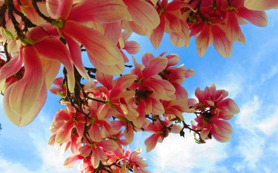 Фото бесплатно ветви, кустарник, лепестки, небо