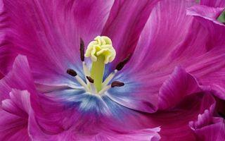 Бесплатные фото цветок,лепестки,розовые,прожилки,пестики,тычинки