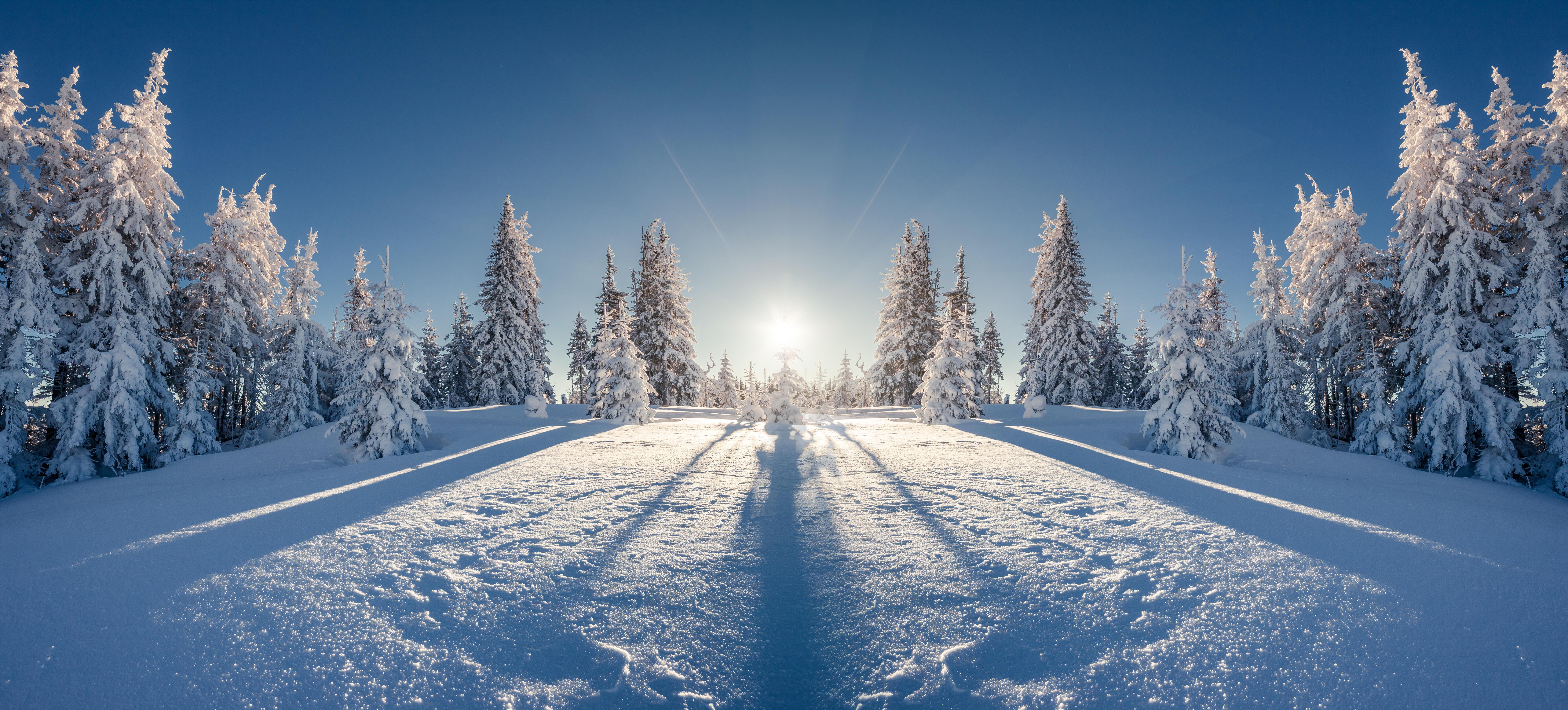 зимний солнечный лес  № 310467 без смс