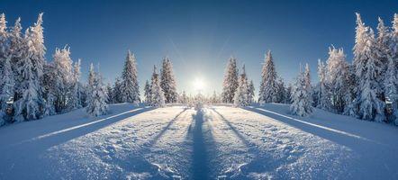 Бесплатные фото зима,снег,лес,сугробы,деревья,пейзаж
