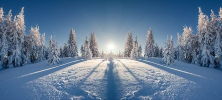Фото бесплатно зима, снег, лес, сугробы, деревья, пейзаж