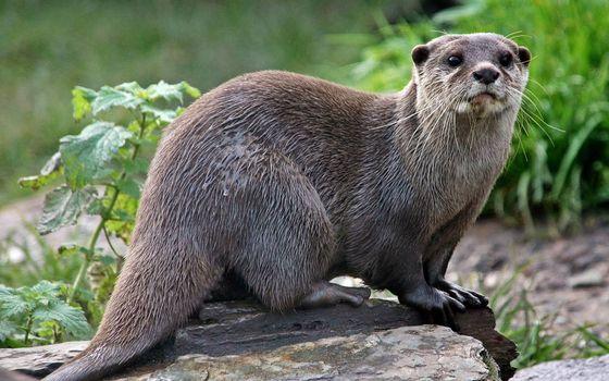 Фото бесплатно зверек, морда, лапы, хвост, шерсть мокрая