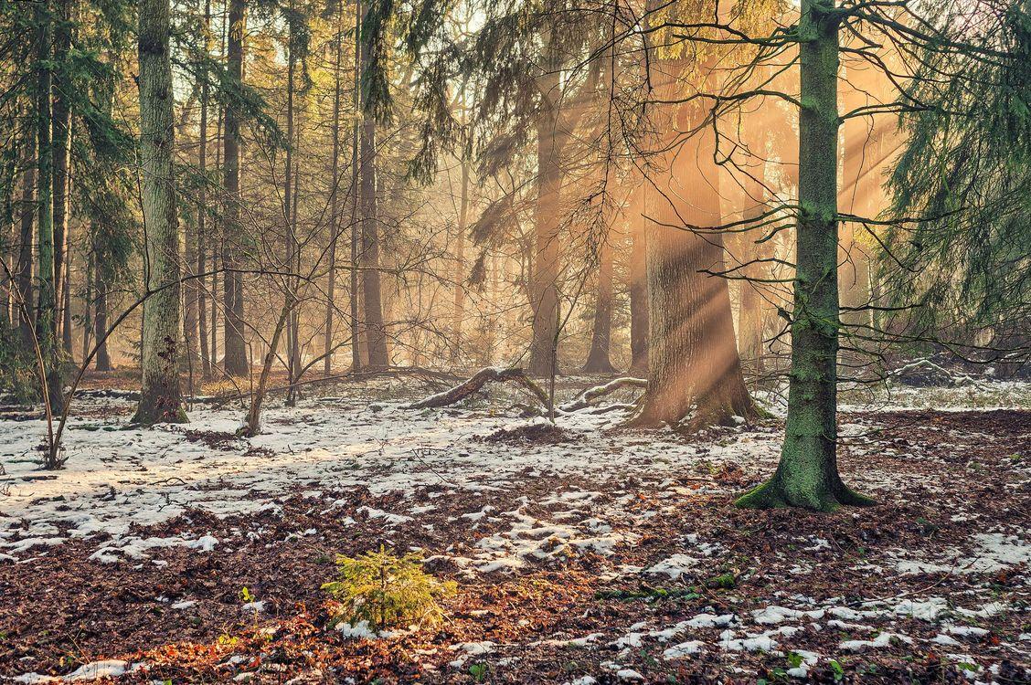 Фото бесплатно лес, деревья, солнечные лучи, пейзаж, пейзажи