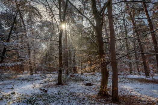 Заставки лес,деревья,солнечные лучи,природа