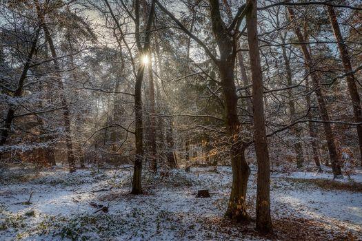 Фото бесплатно лес, солнечные лучи, природа