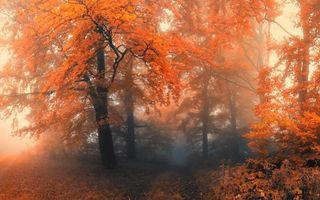 Обои осенний лес, деревья, яркий, оранжевый, цвет