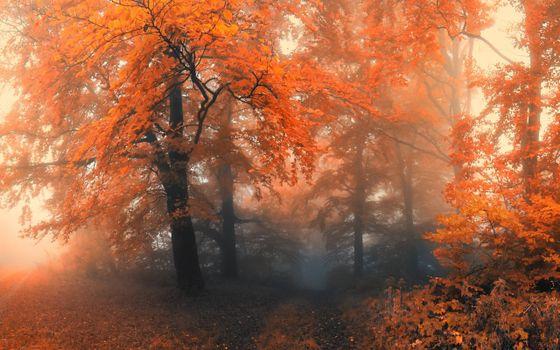 Заставки осенний лес, деревья, яркий