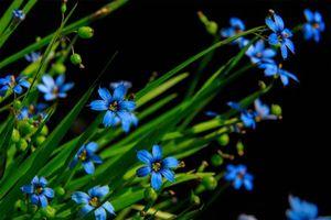 Бесплатные фото цветы, флора, макро, чёрный фон
