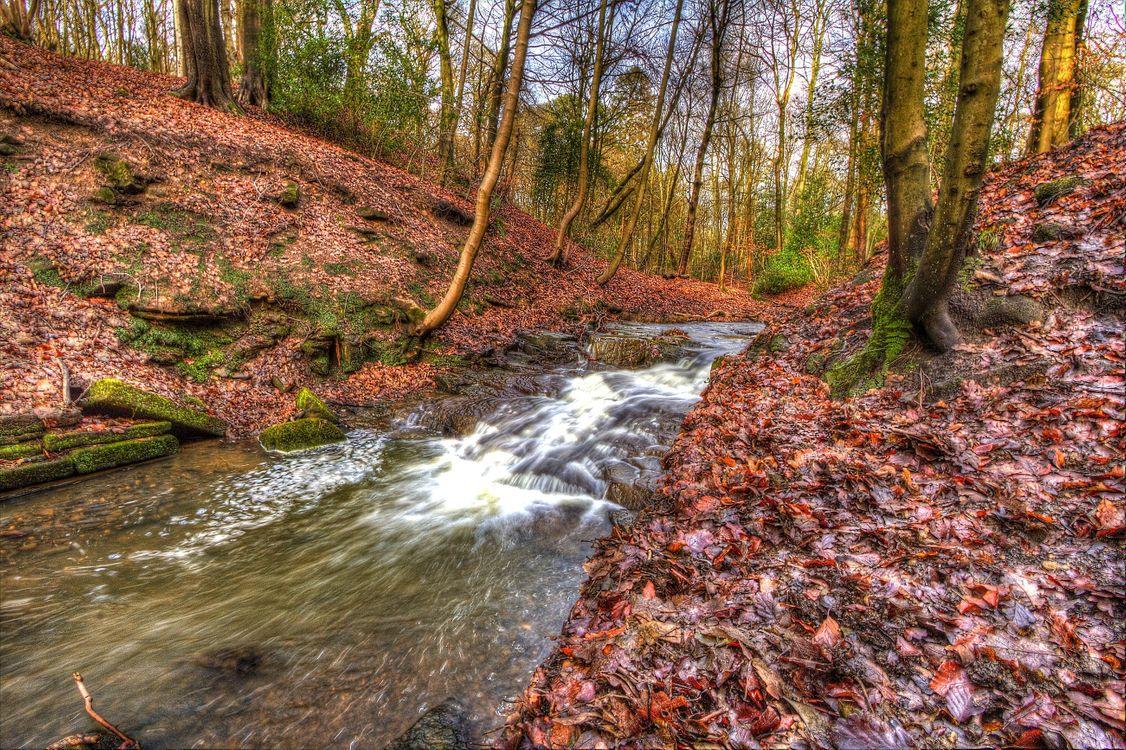 Фото бесплатно осень, река, лес, деревья, природа, пейзажи