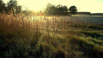 Бесплатные фото берег реки,трава,осень,иней