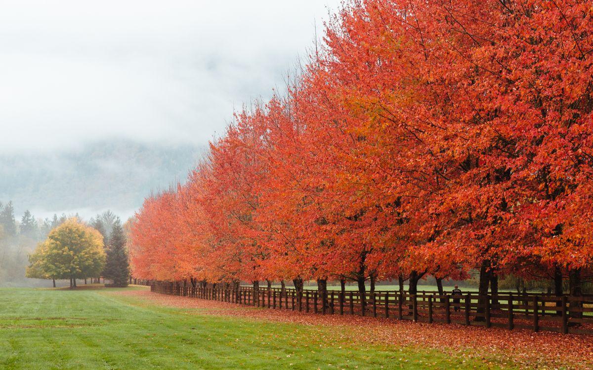 Фото бесплатно Норт-Бенд, Вашингтон, поле, осень, деревья, туман, пейзаж, пейзажи