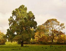 Бесплатные фото осень, лес, парк, деревья, пейзаж