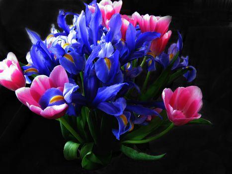 Фото бесплатно нарцисы, тюльпаны, цветы