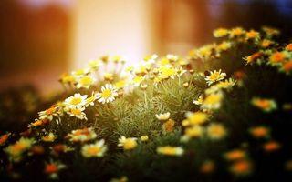 Бесплатные фото ромашки,поляна,трава