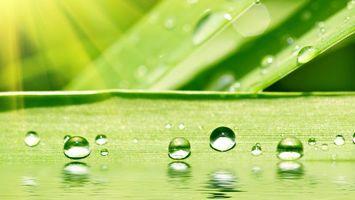 Фото бесплатно зелень, листья, роса