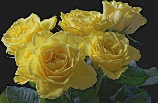 Фото бесплатно желтый, розы, макро