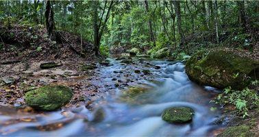 Фото бесплатно лес, река, деревья