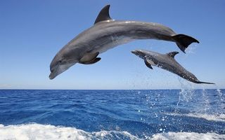 Фото бесплатно дельфины, прыжок, море