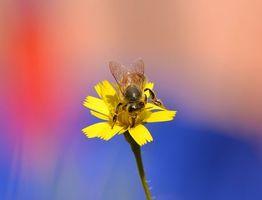 Фото бесплатно цветок, пчела, макро