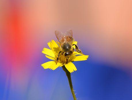 Обои цветок, пчела на телефон высокого качества