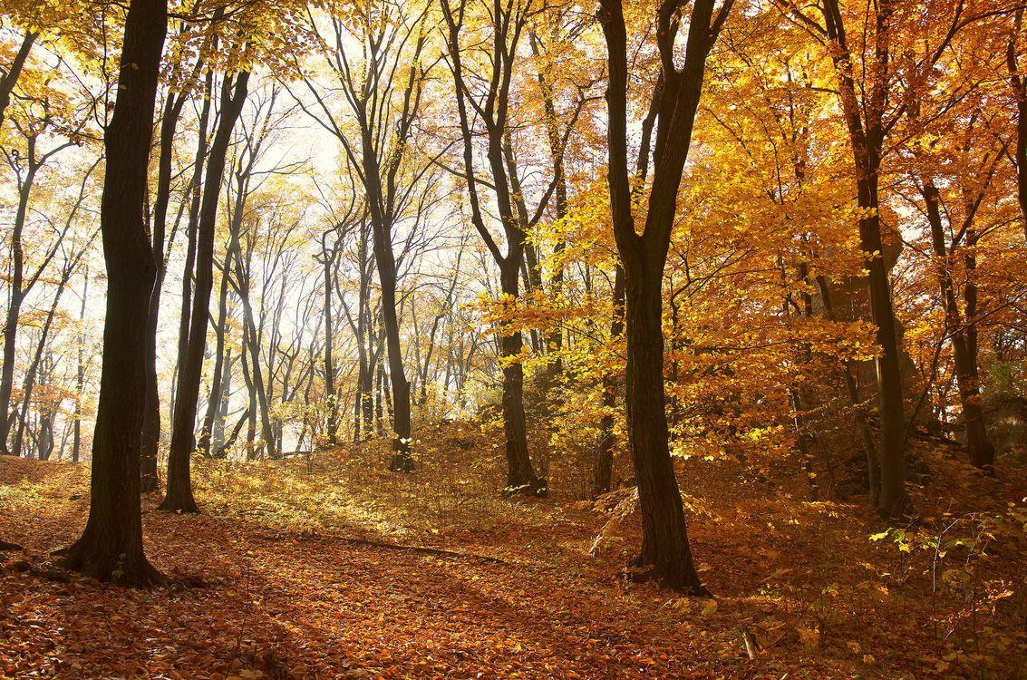 Фото бесплатно осень, лес, деревья, природа, природа - скачать на рабочий стол