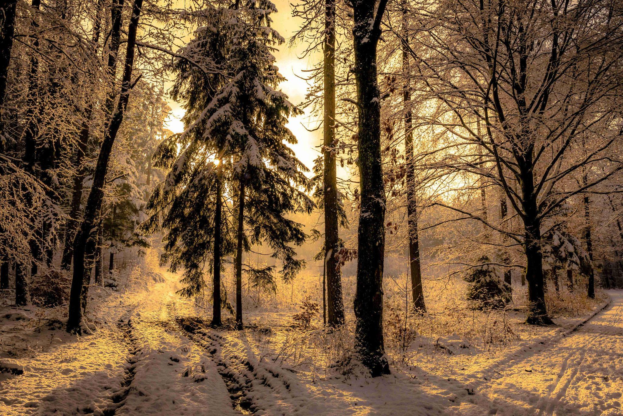 обои зима, закат, лес, деревья картинки фото