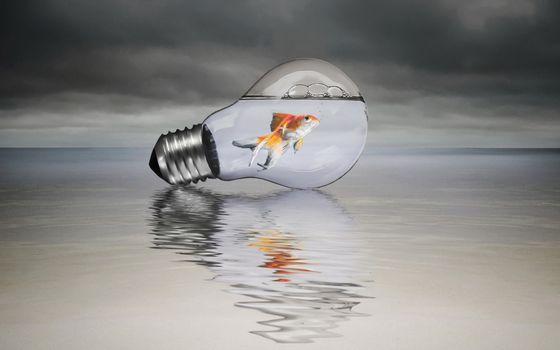 Photo free light bulb, aquarium, fish