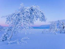 Бесплатные фото Швеция,Лапландия,январь,Шведская Лапландия,зима,деревья,закат