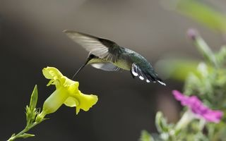 Photo free flight, flowers, beak