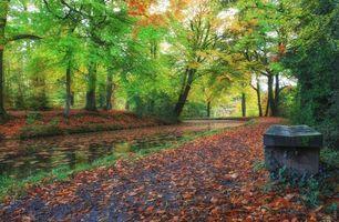 Бесплатные фото осень,канал,лес,деревья,пейзаж