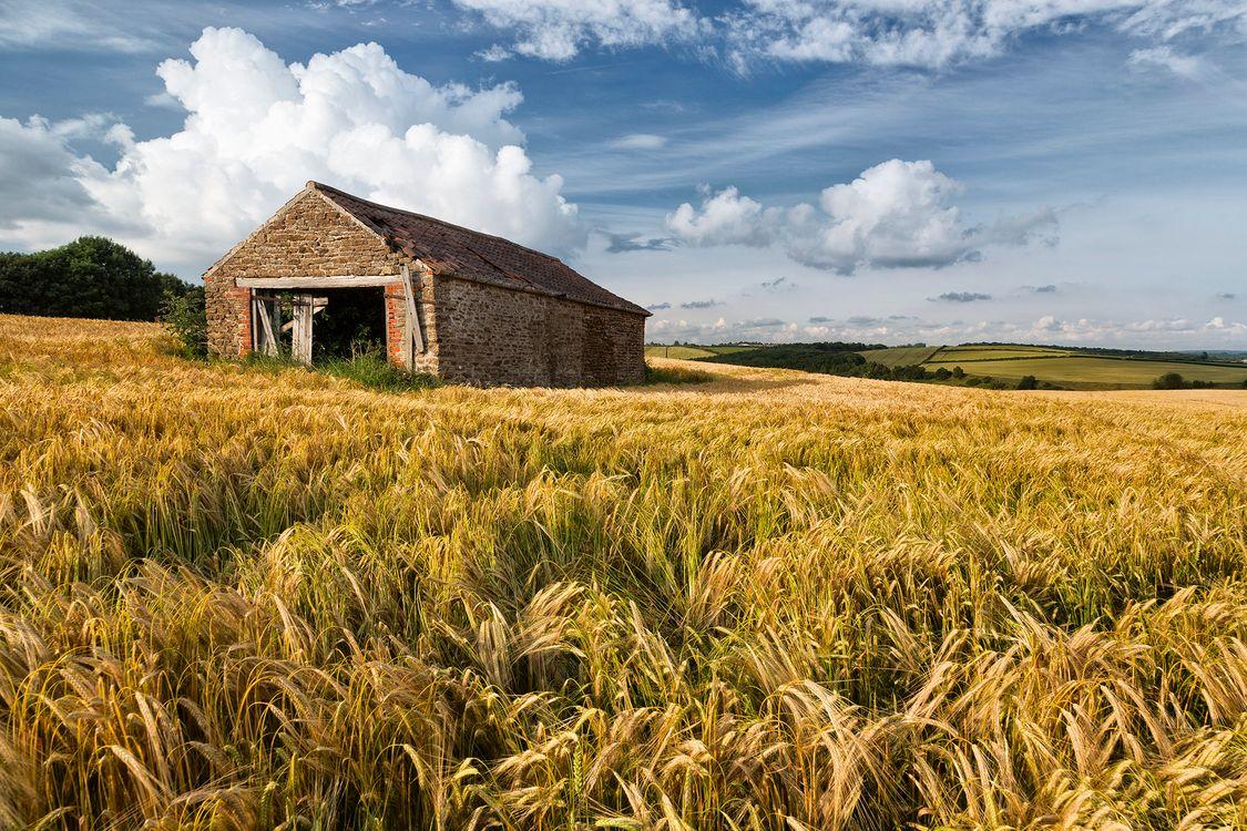 Фото бесплатно поле, колосья, старая ферма - на рабочий стол