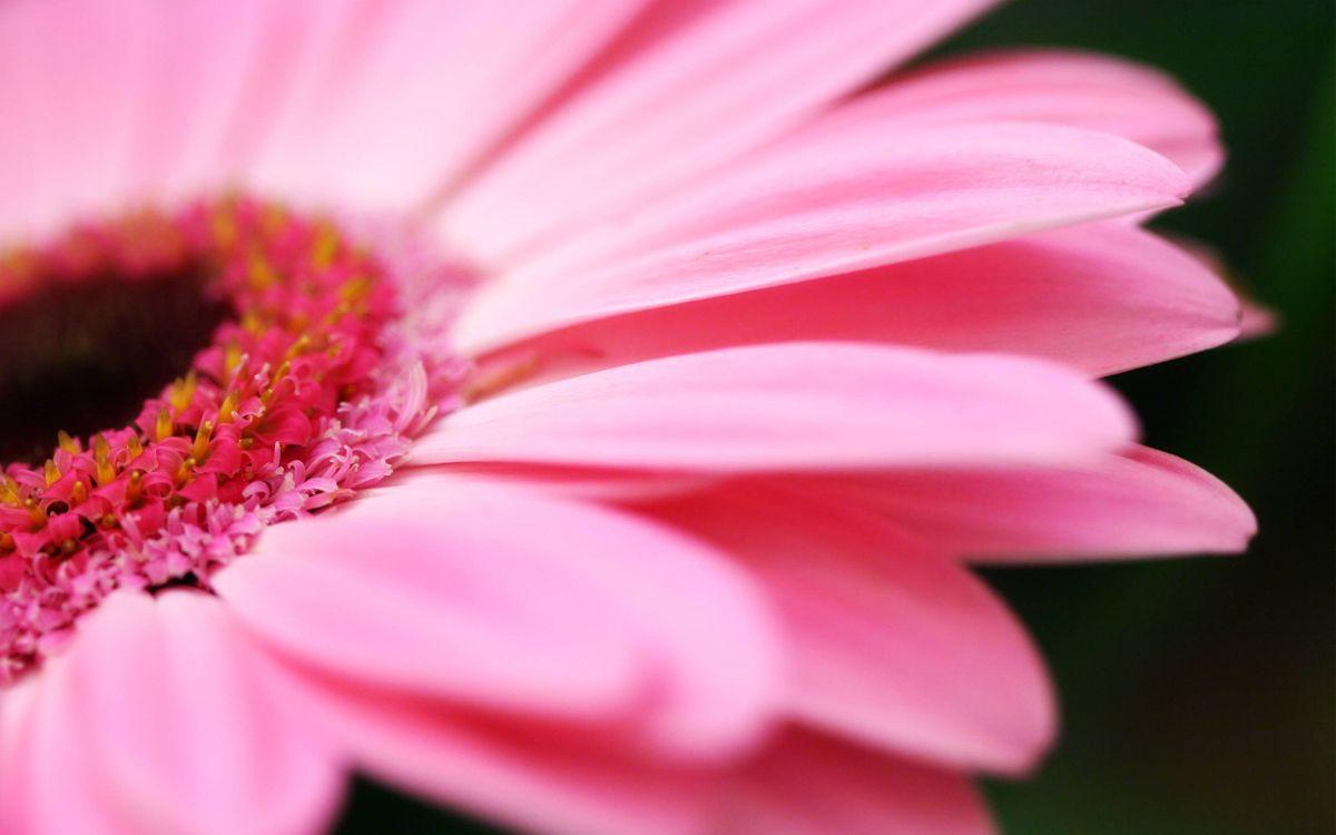Фото бесплатно пестики, цветок, розовый - на рабочий стол