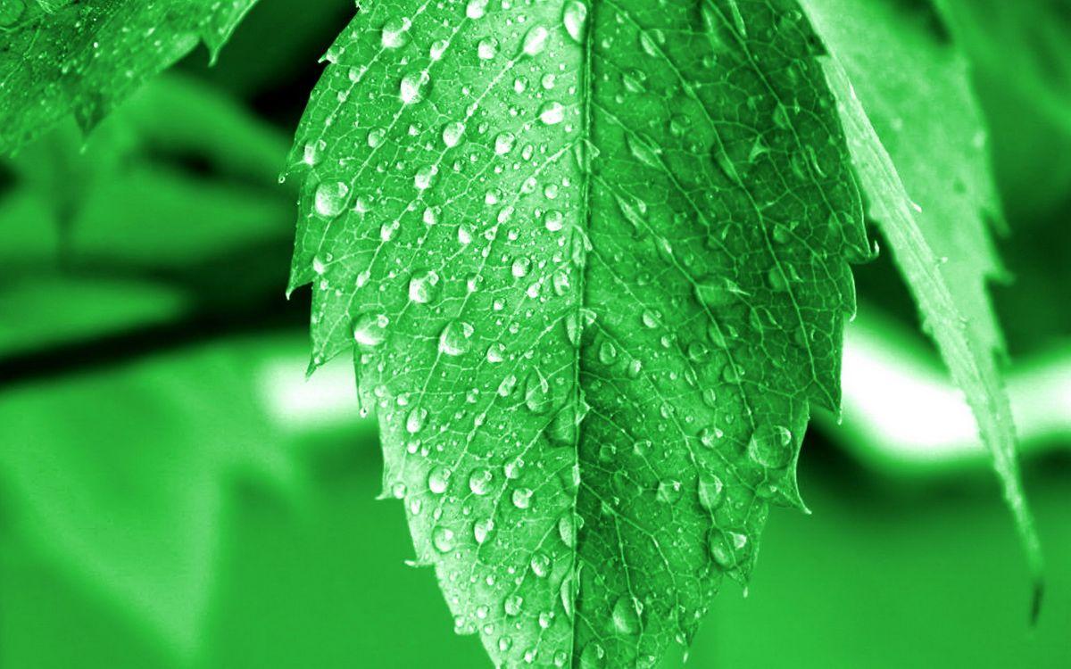 Обои листья, зеленые, прожилки, капли, вода на телефон | картинки макро