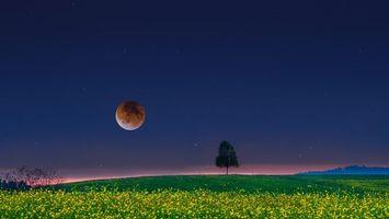 Бесплатные фото поле,ночь,луна,дерево,пейзаж