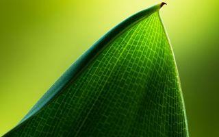 Бесплатные фото лист,зеленый,прожилки,узор,заставка,обои