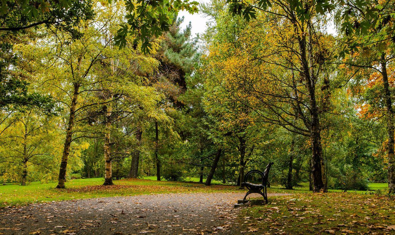 Фото бесплатно осень, парк, лес, деревья, тропинка, лавочка, пейзаж, пейзажи