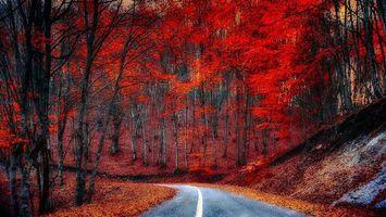 Бесплатные фото закат, осень, лес, дорога, деревья, пейзаж