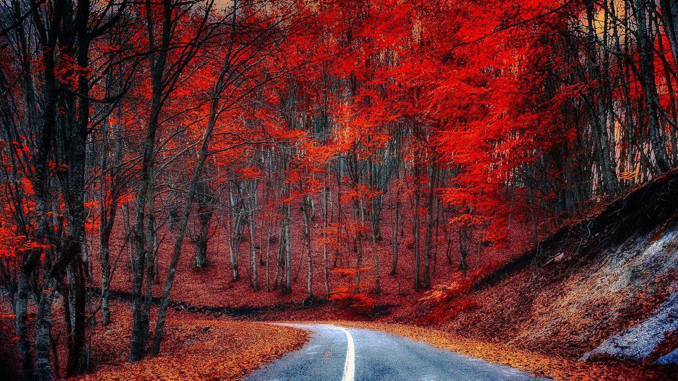 Фото бесплатно закат, осень, лес, дорога, деревья, пейзаж, пейзажи