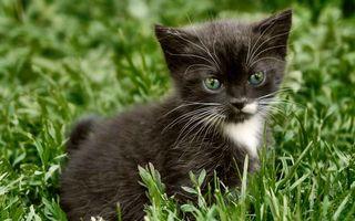 Бесплатные фото котенок,морда,черно-белый,шерсть,трава,зеленая